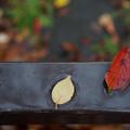 写真: 落葉-雨の日