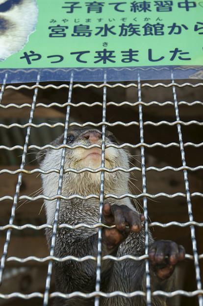 写真: katurahama110311304