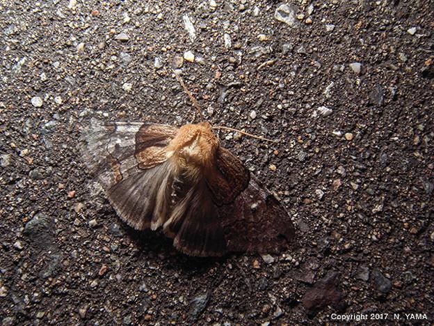 写真: yamanao999_insect2017_266