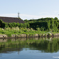 Photos: 鵜飼川付近にて