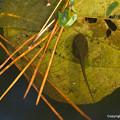 写真: frogs_319