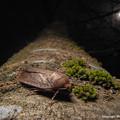 写真: yamanao999_insect2017_382