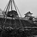 雪吊りと石川門