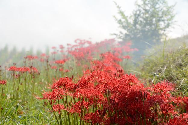 赤い花と白い煙