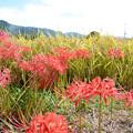 写真: 秋の田んぼ