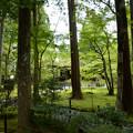 写真: 緑の庭