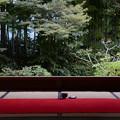 写真: 庭を眺めた
