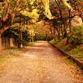 黄色と赤の小道