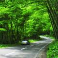写真: 支笏湖緑のトンネル