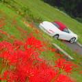 写真: 千枚田の彼岸花