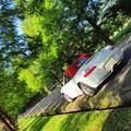 写真: 初秋のメタセコイア
