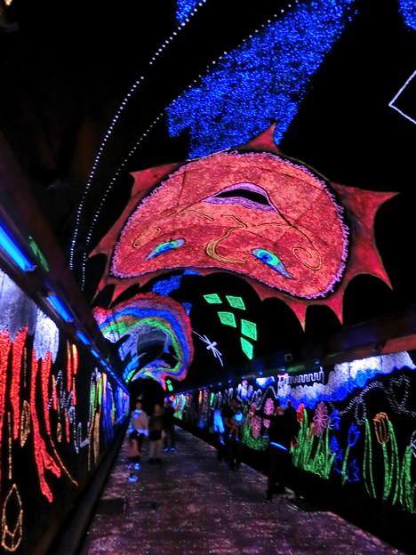 キララ夢トンネル4