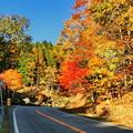 写真: 西ウレ峠の紅葉