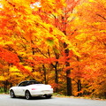 写真: 橙色の森
