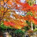 Photos: 根来寺の紅葉2