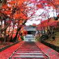 Photos: 毘沙門堂の紅葉