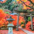 Photos: 毘沙門堂の紅葉3