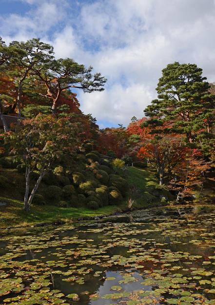 霞城公園の秋