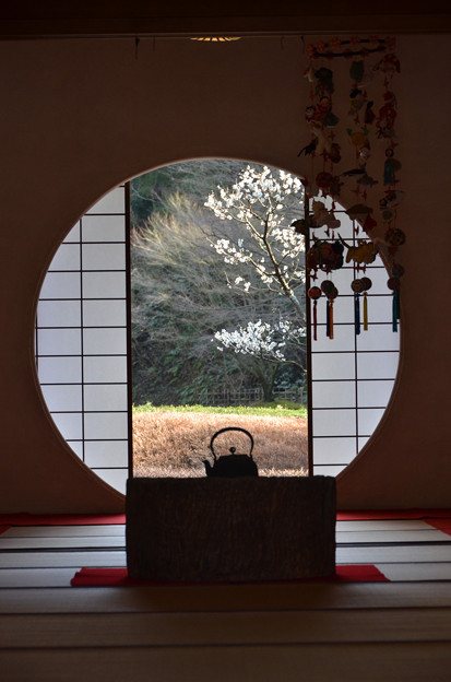Photos: 明月院にて