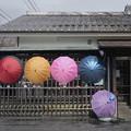 Photos: 傘まつり
