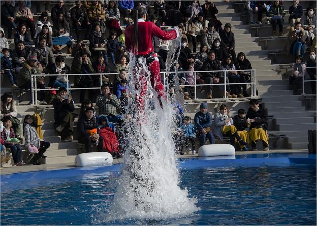 写真: イルカがお姉さんを空中へ