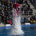 イルカがお姉さんを空中へ
