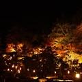 写真: 藤江氏魚楽園ライトアップ
