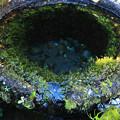 写真: 苔むした湧水口