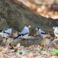 写真: 小鳥の井戸端会議