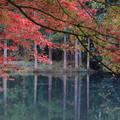 名もなき池の紅葉