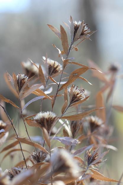 枯れ草の舞