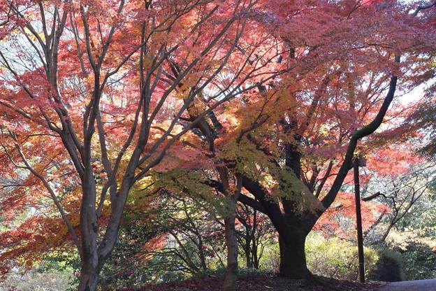 色彩の季節