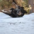 雪で楽しむ愛犬