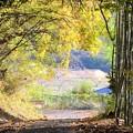 写真: 落ち葉の舞い散る風景~