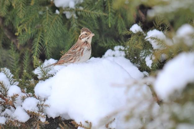 写真: こんな雪でも元気!