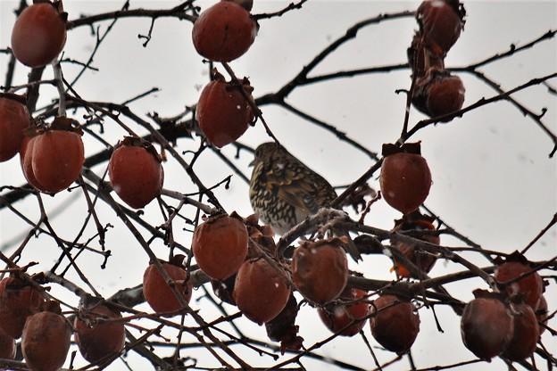 写真: 柿を独り占め~