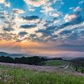 写真: 白木峰高原 コスモス