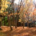 興山園 紅葉 2