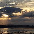 写真: 朝焼けの飛翔