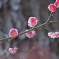 Photos: 春の光を浴びて2