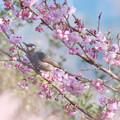 Photos: 桜に喜ぶ