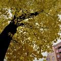 写真: 秋の街路樹