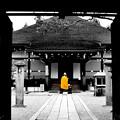 写真: 仁和寺にて