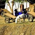 Photos: 農家