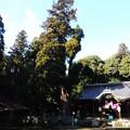 3363 初詣 伊富岐神社
