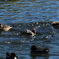 Photos: 7023 かきまぜ鳥
