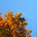 Photos: IMG_8785 紅葉と秋空と飛行機雲