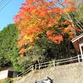 Photos: IMG_8792 紅葉と