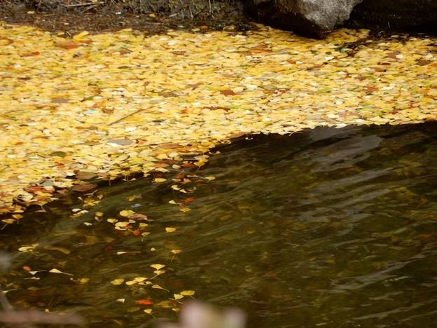 写真: 11 湖面に浮かぶ