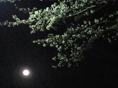 月花見 W53CA